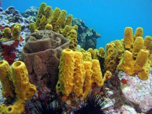 Coral shot on SeaLife underwater camera