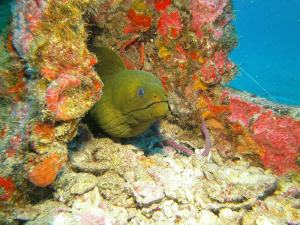 Moray eel shot on SeaLife underwater camera