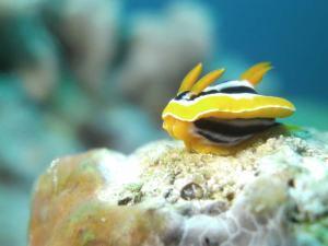 Nudibranch shot on SeaLife underwater camera