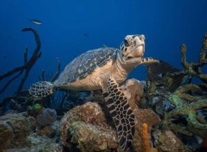 Sea turtle shot on SeaLife underwater camera