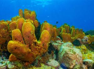 Yellow coral shot on SeaLife underwater camera