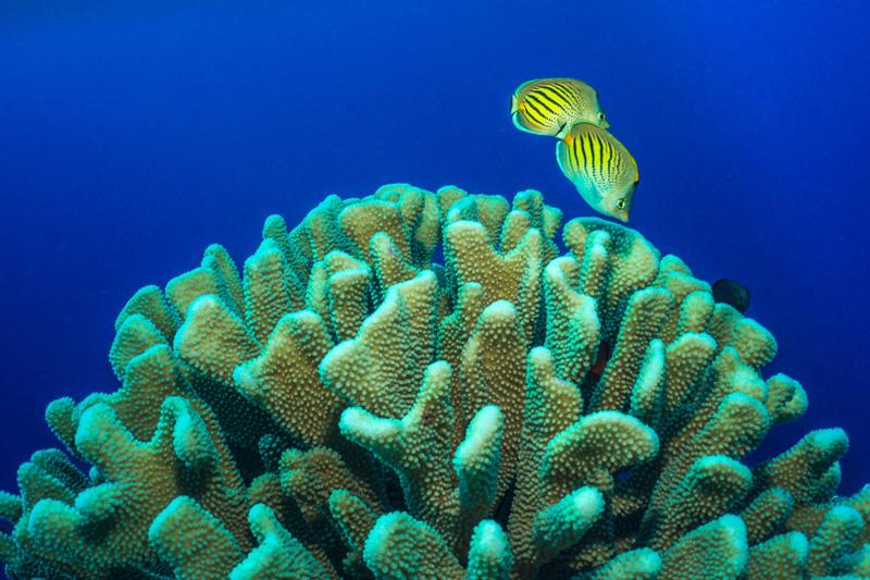 below the surface ocean photography SeaLife cameras
