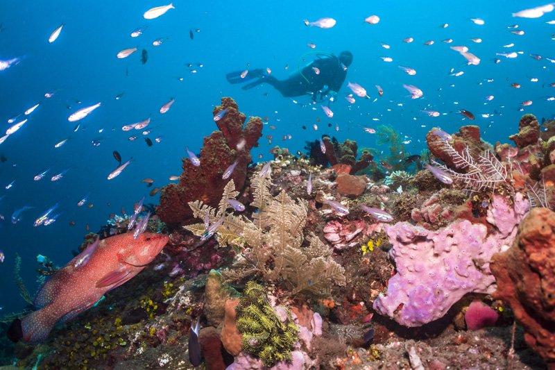 reef scene bali indonesia ocean photography