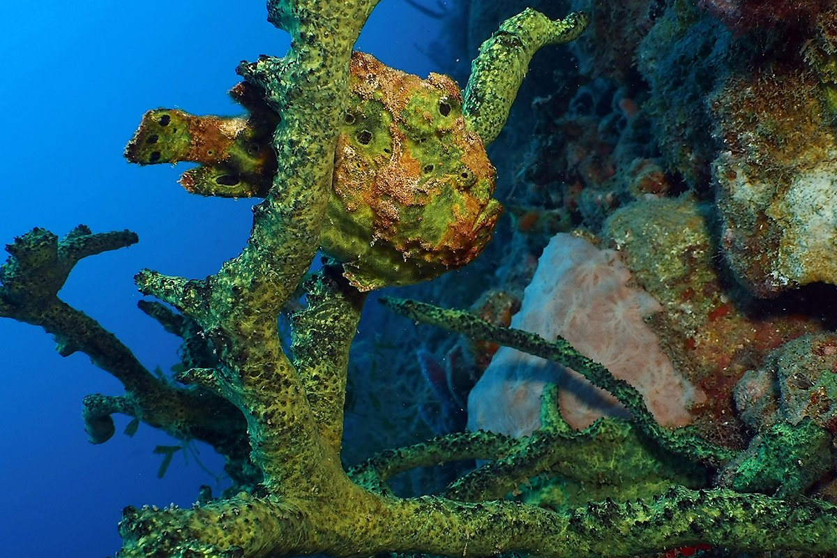 Frogfish Scuba Photograph DC2000 Pro Camera