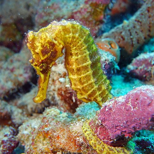 seahorse underwater photo sealife cameras