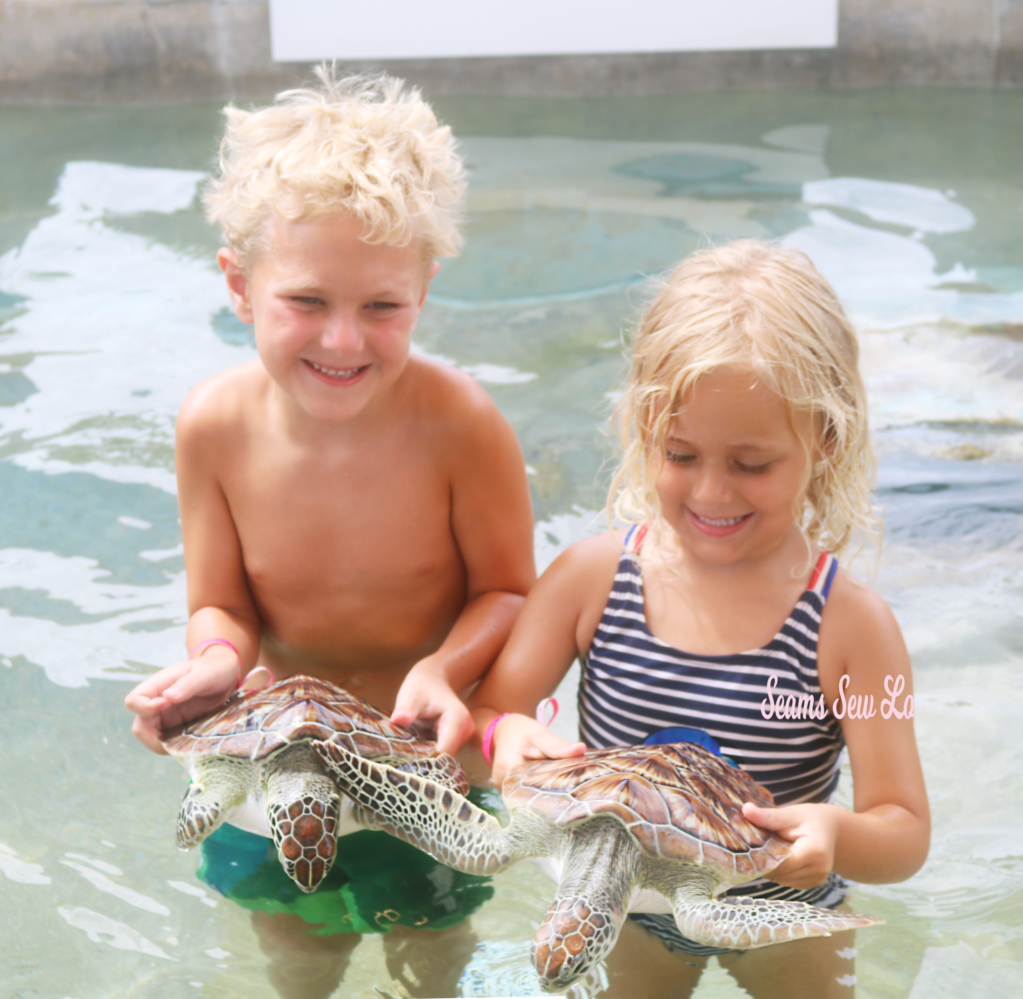 Children holding turtles at the Cayman Turtle Center