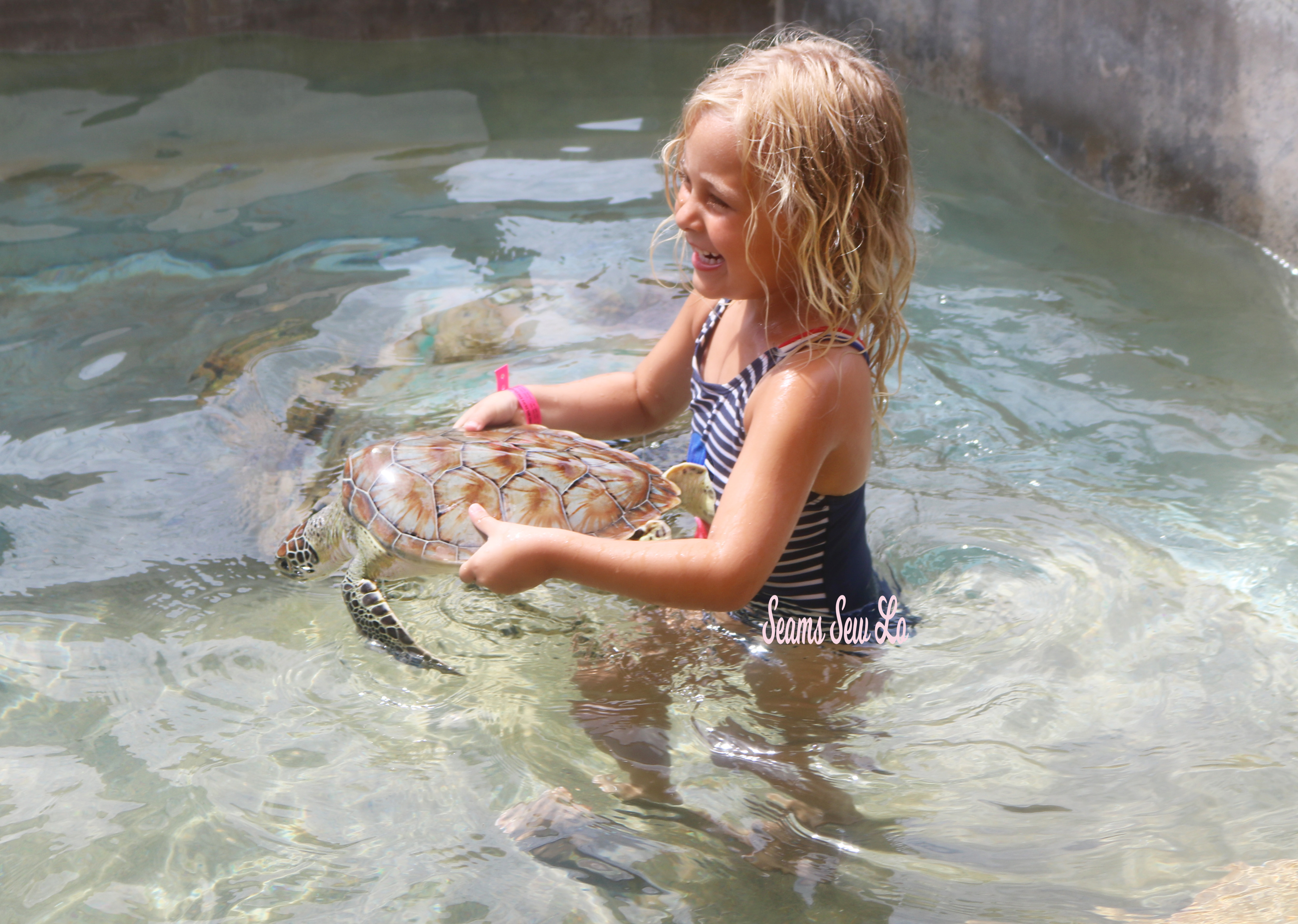 Holding Turtles at the Grand Cayman Turtle Center