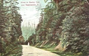 Stanley Park Postcard - Scene in Stanley Park near Vancouver BC 1908