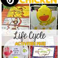 Chicken Life Cycle Activities FREE
