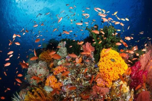 underwater seapearlcharter