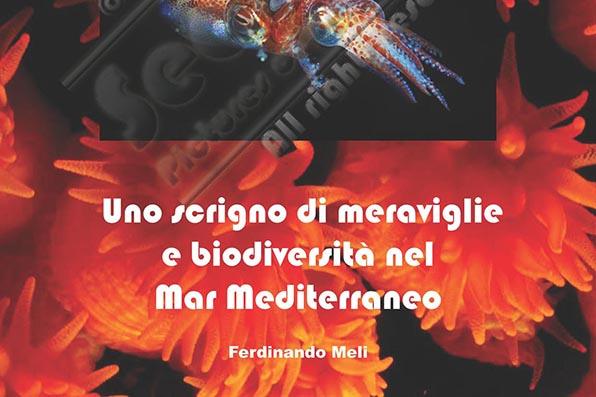 Brochure-AMP-CapoGallo-IsoladelleFemmine_cropped