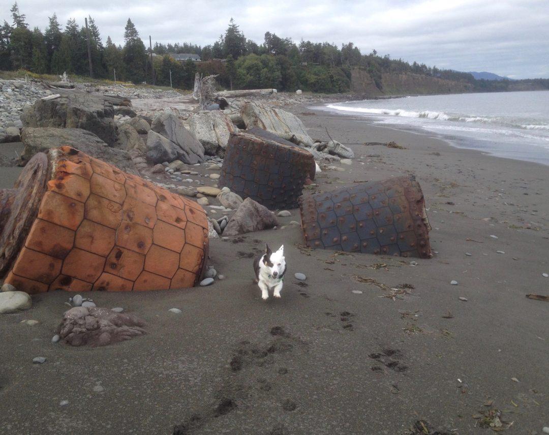 Seaport Games, beach, corgi dog, inspiration