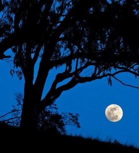 Supermoon Lunar Eclipse, Super Moon, Paul Kozal