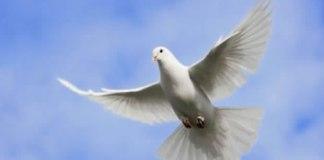 O Espírito da graça