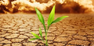 A semente santa