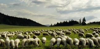 Salmo 23: O Senhor é o meu pastor - um salmo para aprender e amar