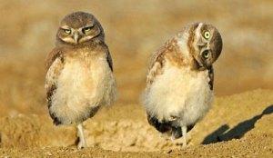 owl-quirks