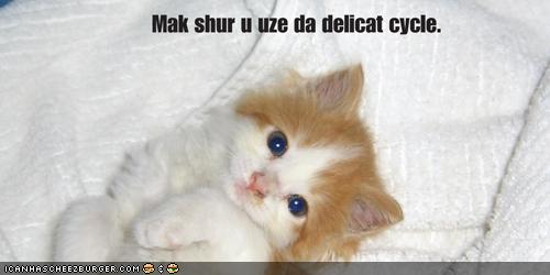 LOLcat Speak