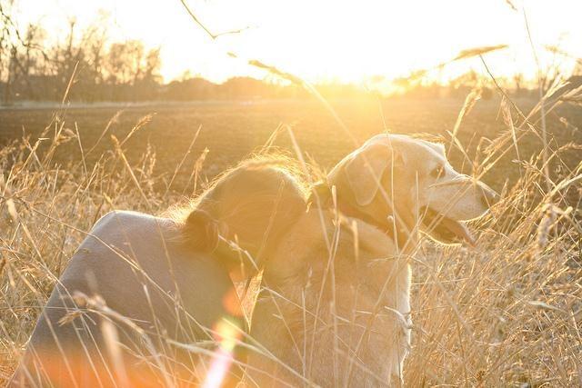 sunshine-dog