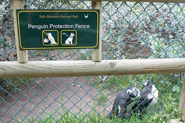 penguin-proof