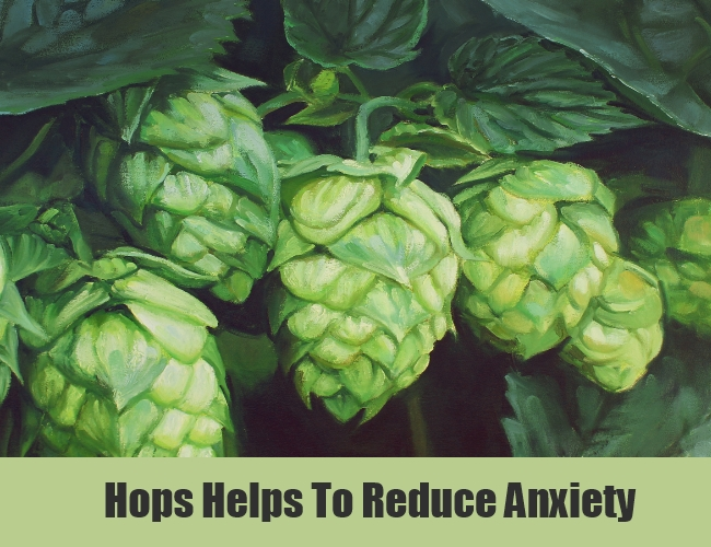 Hops Helps To Reduce Anxiety