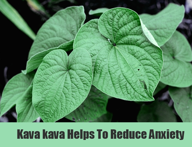 Kava kava Helps To Reduce Anxiety