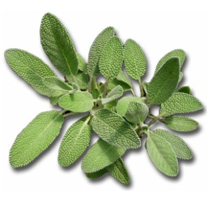 Herbal Remedies For Urinary Tract Infection