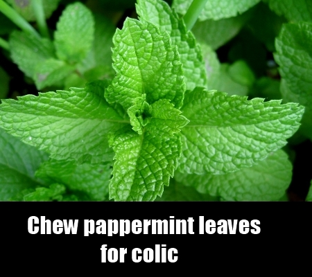 pappermint leaves