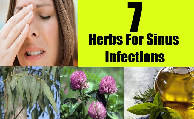 7 Herbs For Sinus Infections