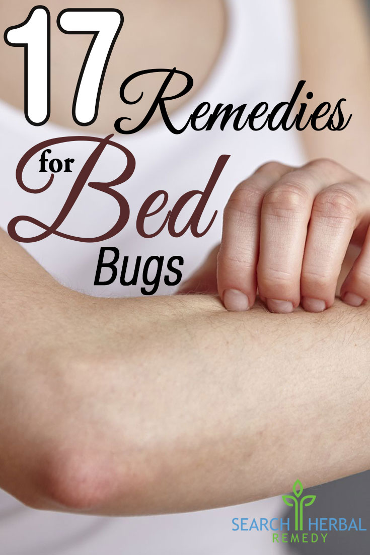17-remedies-for-bed-bugs
