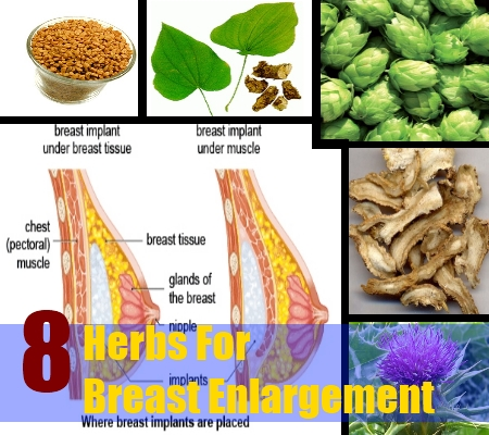 Natural herbs for breast enhancement