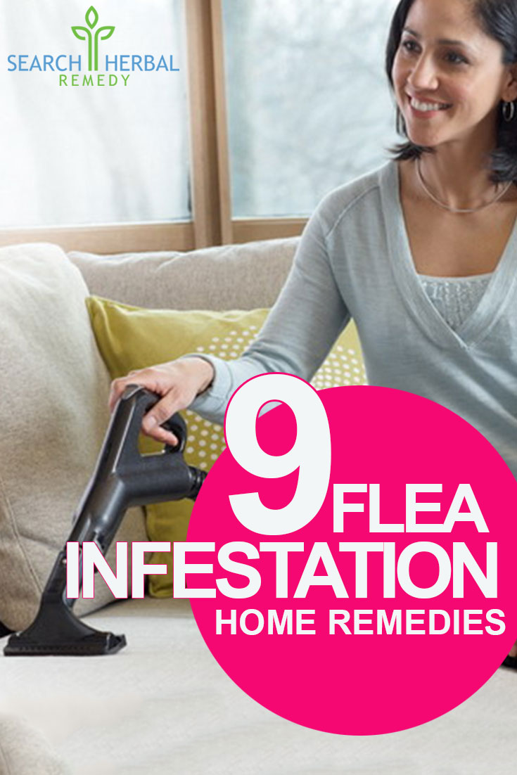 9 Flea Infestation Home Remedies Natural Treatments