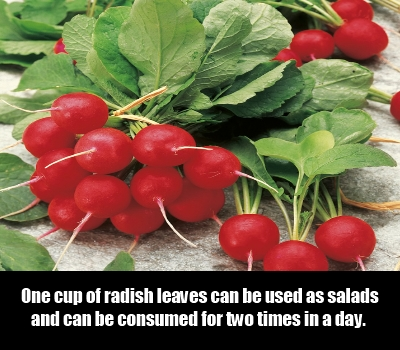 radishes and figs