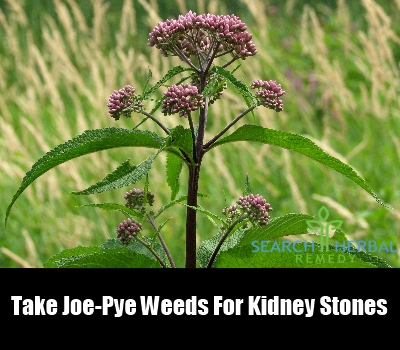 joe-pye weeds