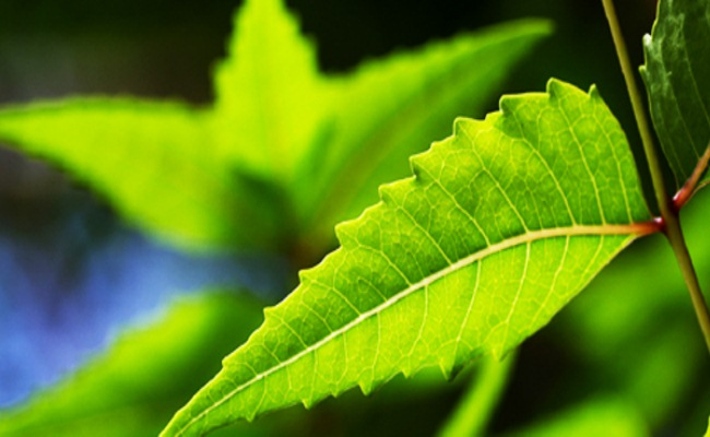 Neem Therapy