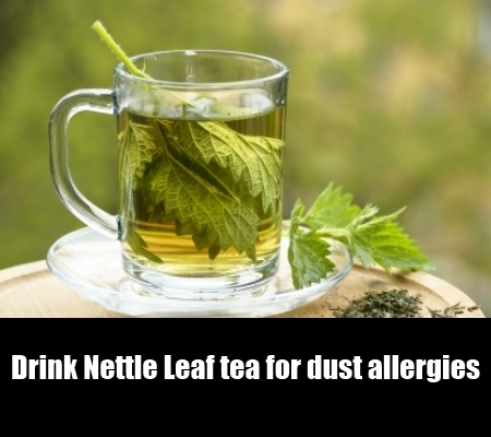 7 Fight Off Dust Allergies With Herbal Remedies How To