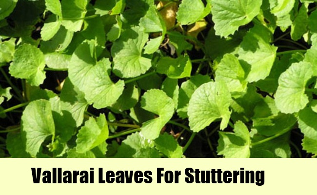 Vallarai Leaves