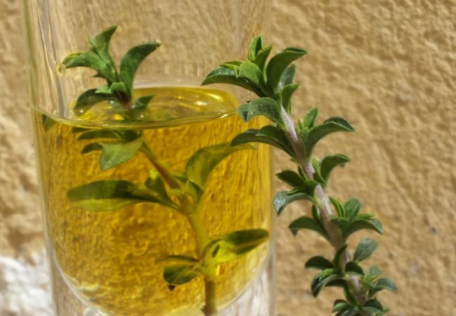 Thyme Oil For Camping First Aid