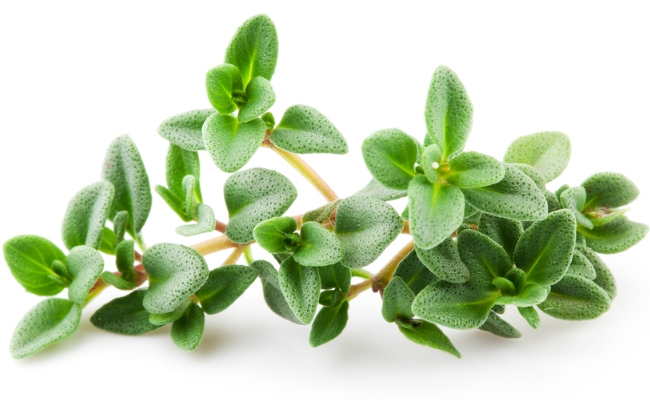 Leaves of Thyme