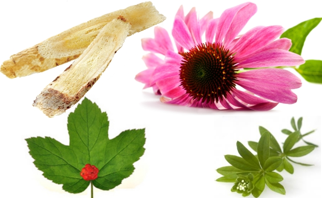 Astragulus, Goldenseal, Echinacea And Cleavers
