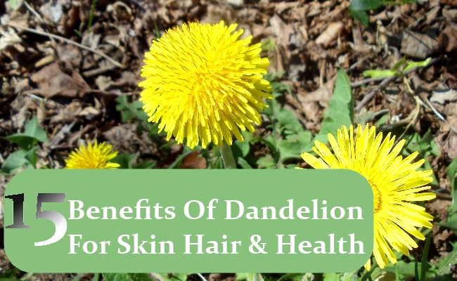 Benefits Of Dandelion For Skin Hair And Health