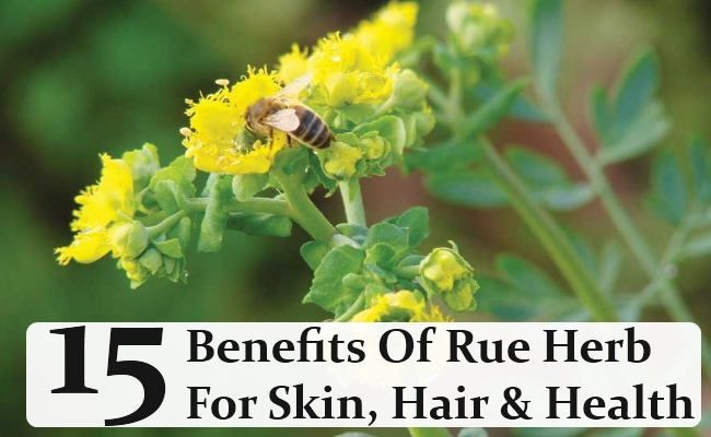 Benefits Of Rue Herb For Skin, Hair, And Health