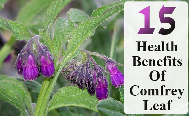 15 Superb Health Benefits Of Comfrey Leaf Search Herbal