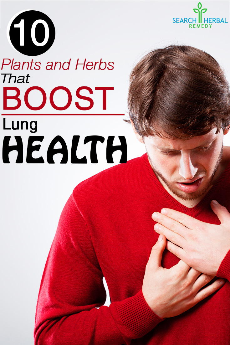 10 Plants and Herbs That Boost Lung Health