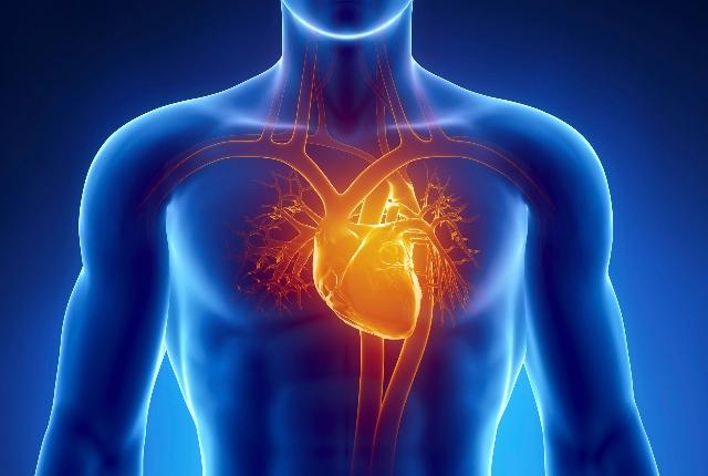 Improves Cardiovascular Health