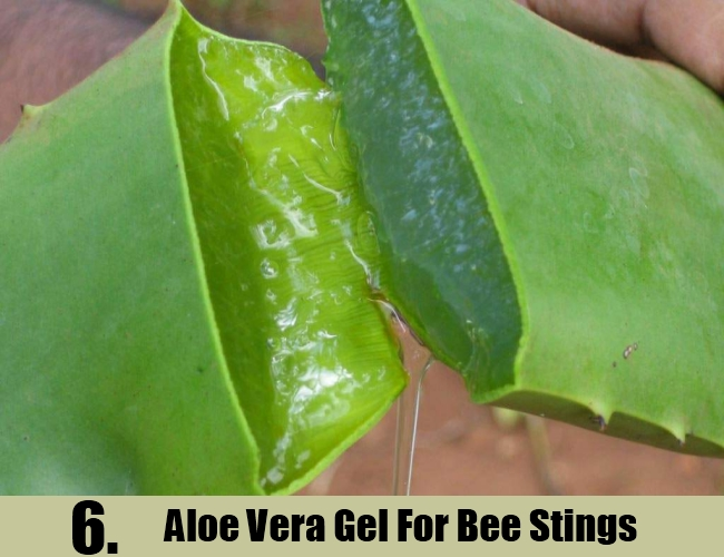 Aloe Vera Gel For Bee Stings