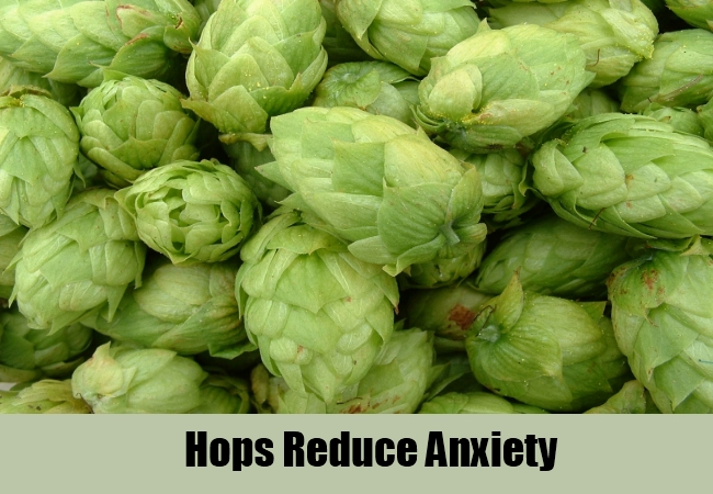 Hops Reduce Anxiety