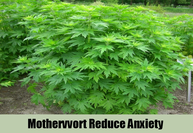 Mothervvort Reduce Anxiety