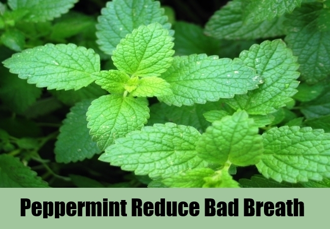 Peppermint Reduce Bad Breath