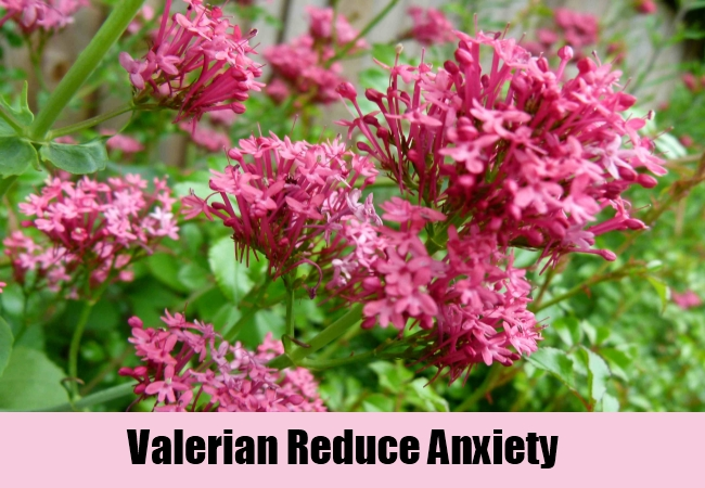Valerian Reduce Anxiety